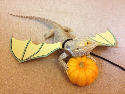 halloween-costumes-for-pets-18
