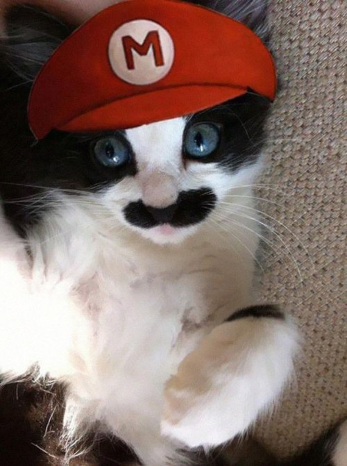 halloween-costumes-for-pets-3