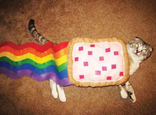 halloween-costumes-for-pets-4