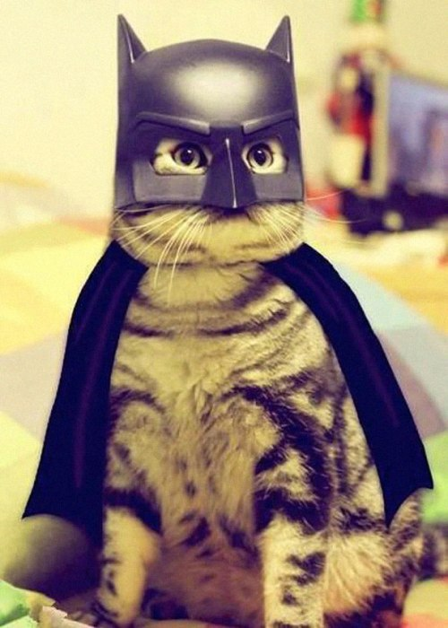 halloween-costumes-for-pets-9